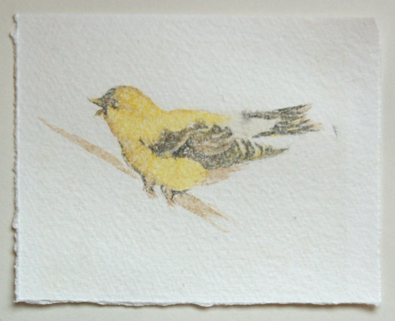 small-yellow-bird